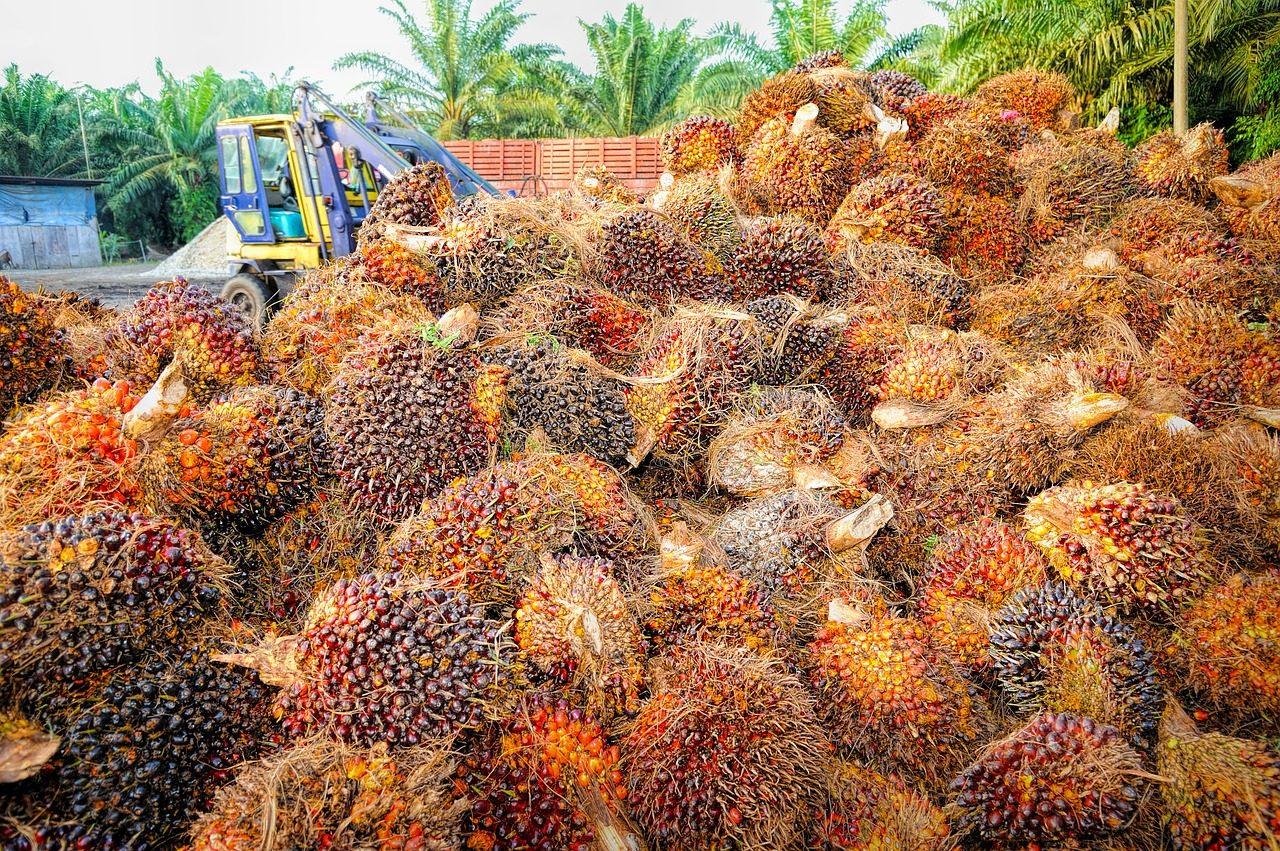 Produire du biodiesel avec de l'huile de palme