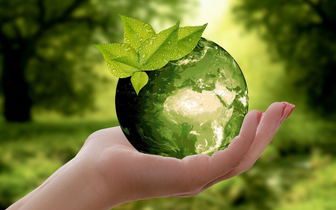 À partir de quels végétaux obtient-on le biocarburant